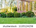 beautiful green garden with...   Shutterstock . vector #1135124258