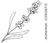 lavender flower in a style... | Shutterstock . vector #1135126772