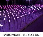 pink light line up   Shutterstock . vector #1135151132