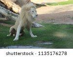 al ain  united arab emirates  ... | Shutterstock . vector #1135176278