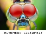 Stock photo close up dragonfly 1135184615
