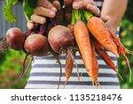 organic home vegetables carrots ... | Shutterstock . vector #1135218476