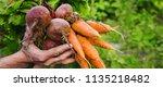 organic home vegetables carrots ... | Shutterstock . vector #1135218482