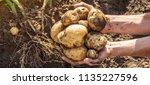 organic homemade vegetables in... | Shutterstock . vector #1135227596