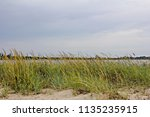 vegetation on the beach and a... | Shutterstock . vector #1135235915