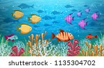 underwater panorama. sea under... | Shutterstock .eps vector #1135304702