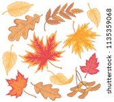 multicolor autumn leaves of... | Shutterstock .eps vector #1135359068