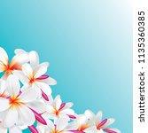 vector of plumeria flower... | Shutterstock .eps vector #1135360385