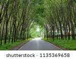 row of natural tunnel of rubber ... | Shutterstock . vector #1135369658
