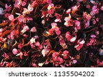 background of small pink... | Shutterstock . vector #1135504202