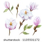 watercolor set of magnolia... | Shutterstock . vector #1135531172