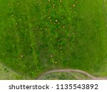 aerial photo of a grass meadow... | Shutterstock . vector #1135543892