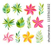 tropical collection with exotic ... | Shutterstock .eps vector #1135561832