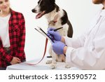 dog getting checked up at... | Shutterstock . vector #1135590572