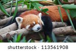 Red Panda  Firefox  Sleeping On ...