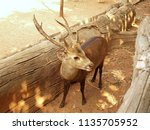 Small photo of The deer brown stood in the stall Summer in the zoo remain uneducated Nakhon Ratchasima Thailand.