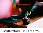cactus on the morning work | Shutterstock . vector #1135715798