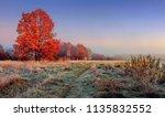 autumn nature landscape.... | Shutterstock . vector #1135832552