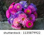 Pink And Purple Flowers Of...