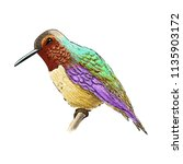 hummingbird with colorful... | Shutterstock . vector #1135903172