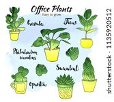Office Indor Plants   Vector...