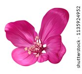 vector realistic flower close... | Shutterstock .eps vector #1135924952