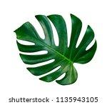green leaves pattern leaf... | Shutterstock . vector #1135943105