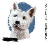 Cairn Terrier Puppy Portrait....