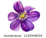 Beautiful Flower Purple Clemat...