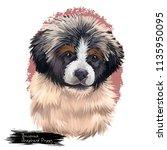 bucovina shepherd puppy... | Shutterstock . vector #1135950095