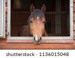 the horse in the window | Shutterstock . vector #1136015048