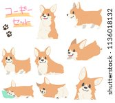 corgi illustration set the... | Shutterstock .eps vector #1136018132