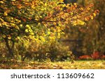 autumn background  yellow... | Shutterstock . vector #113609662