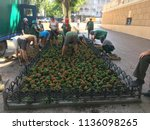 workers of the planting of... | Shutterstock . vector #1136098265