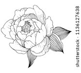 peony flower in a vector style... | Shutterstock .eps vector #1136127638