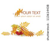 autumn background with yellow... | Shutterstock .eps vector #113614438