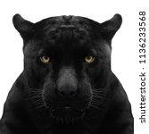 Black Panther Shot Close Up...