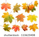 Isolated Autumn Maple Leaves