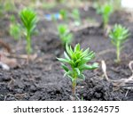 there are green sprout of grass ... | Shutterstock . vector #113624575