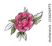 garden peony. watercolor  hand... | Shutterstock .eps vector #1136246975