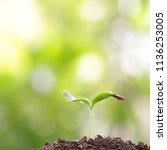 green young plant growing with... | Shutterstock . vector #1136253005