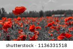 Red Poppies In A Poppies Field...