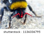 bee psychedelic effect red... | Shutterstock . vector #1136336795