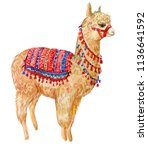 alpaca  watercolor illustration ... | Shutterstock . vector #1136641592