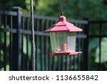 vintage lantern style bird... | Shutterstock . vector #1136655842