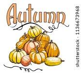doodle pumpkins.vector paint... | Shutterstock .eps vector #1136673968