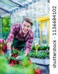 dedicated handsome florist... | Shutterstock . vector #1136684102