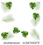 green leafs of plant on white... | Shutterstock .eps vector #1136744375