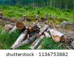 dead and felled trees attacked...   Shutterstock . vector #1136753882