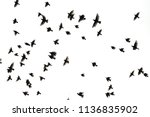 silhouette of a flock of flying ... | Shutterstock . vector #1136835902